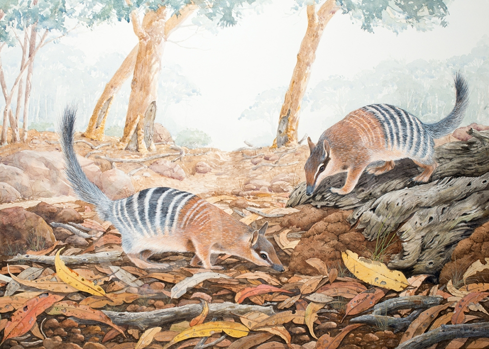The Find- Numbats Small