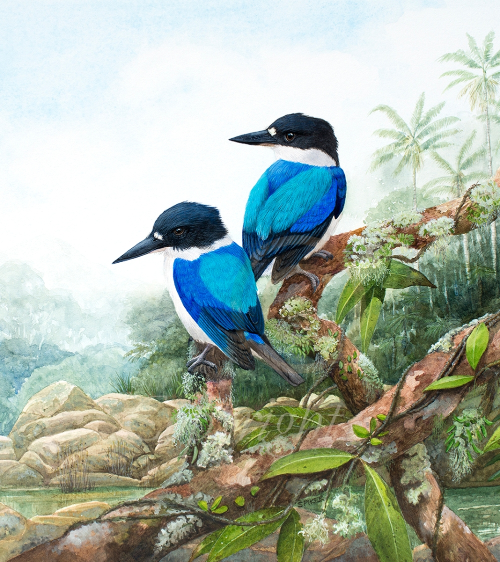 Forest Kingfishers by the River MR (1)