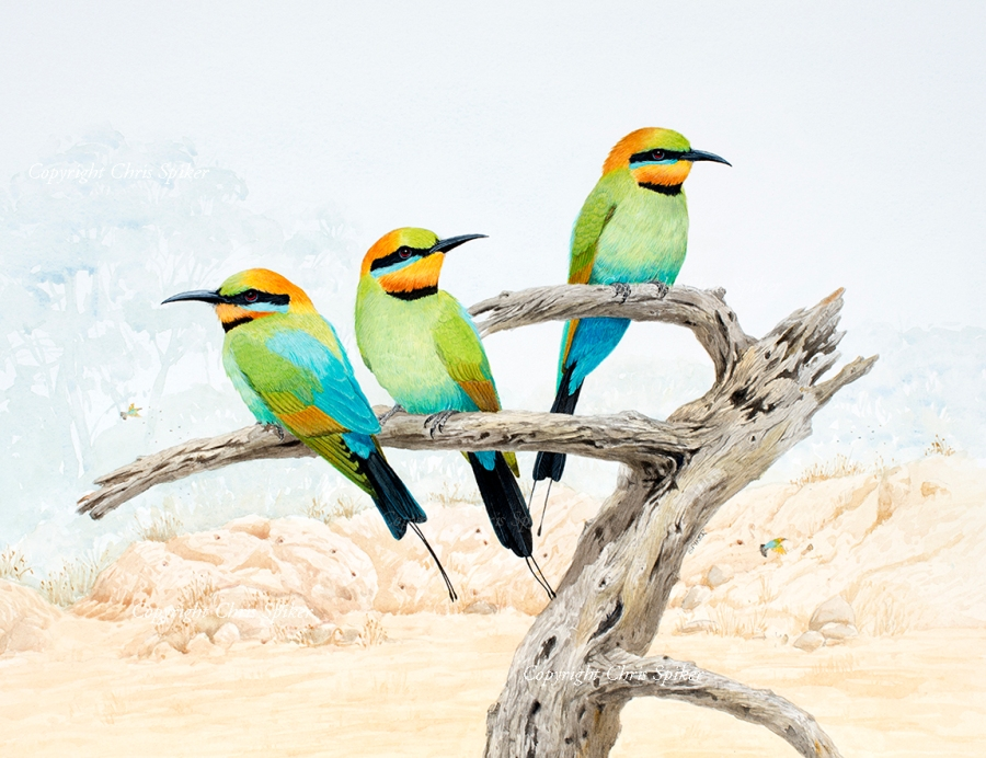 Rainbow Bee Eaters at the Old Quarry SMALL