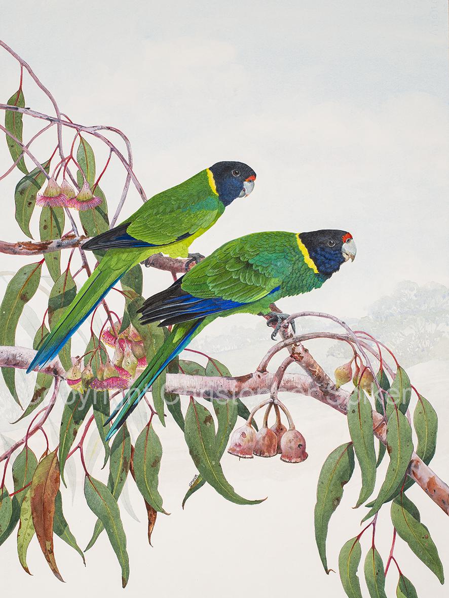 Twenty Eights parrots small