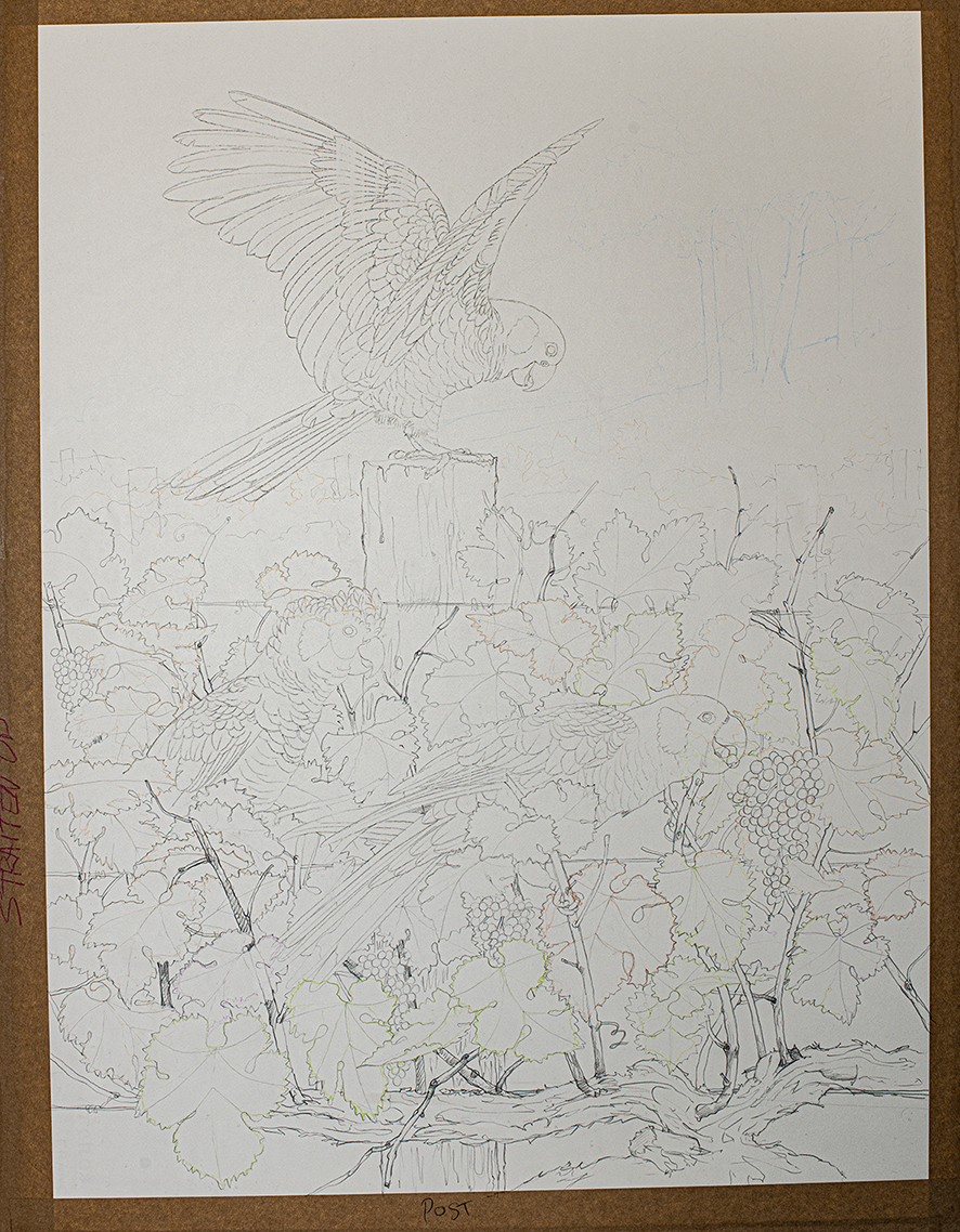 TRACED IMAGE PRE PAINTING